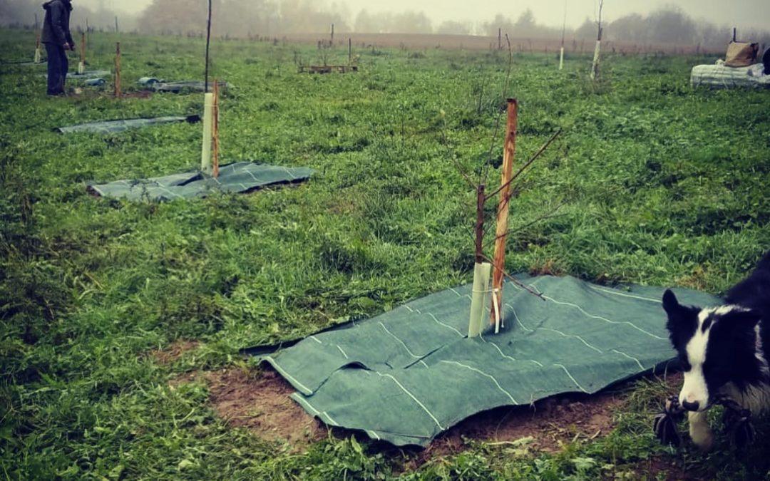 Forêt comestible : Choisir la taille et placer ma forêt-jardin sur le terrain