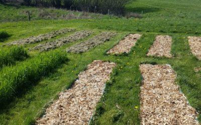 Débuter son autosuffisance alimentaire au mois d'avril – saison 1